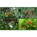A few kinds of berries I saw in the woods.....