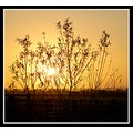 sunset favesongs tree silhouette golden greylake somerset nature somersetdreams