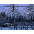 winter snow birch tree barn moon