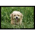 dog nature animals pets white grass cute friend