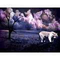 tiger animals photomanipulation