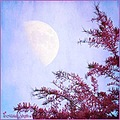 moon daylight blue sky pink tree
