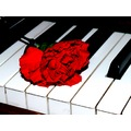 Carnation On My Piano