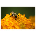 yellow nature bee insect