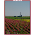 summer nature landscape flowers netherlands CH1988