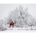 red frost snow winter shed