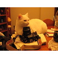 chat cat white camera