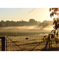 gate paddocks fog trees sunrise perth hills littleollie