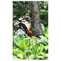 Woodpecker May 2012