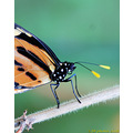 Butterfly nature insect macro