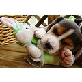 dogs animals puppies pets cute