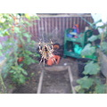 Spider in my greenhouse