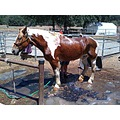 Dolly