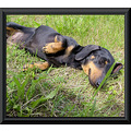 Cindy grass rest sausage dog