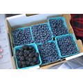 berries fruit blue