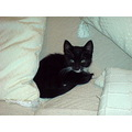Hello Fotothingers, my name is Riko. My owner is having a hard time right now so Jon is looking a...