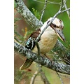 kookaburra bird nature wildlife
