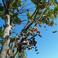 shoetree michigan roadside