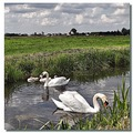 netherlands eemdijk water swan reflectionthursday nethx eemdx waten swanx