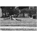 park petersburg russia girl grass blackwhite