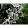 broadway tower worcestershire cotswolds frost ivy