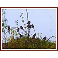 sparrows my garden