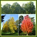 colours autumn trees Park Bertrand Geneva collage