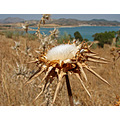snail thistle blue lake water sky home alora andalucia spain