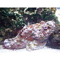 Aquatopia
