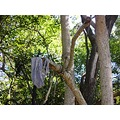 underwear forest woods tree