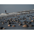 Vlieland beach shells
