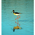 A'eo