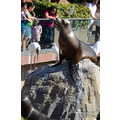 seaworld orlando florida show seal birds ibis people