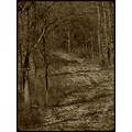 nature forest tree bush dead fallen leaves sepia