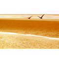 wildlife birds geese flight sand beach nature golden