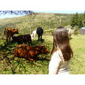 2010 portugal madeira pauldaserra cows sun countryside me