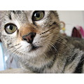cat portrait cinzia