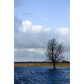 Normally this tree is on dry ground, but the water in the lake is so high that the land has flooded.