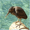 Back to the origins...
