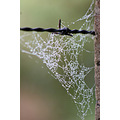 dew misty morning newzealand nature spiderweb
