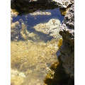 rock pool ocean beach water sea fish limestone