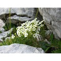 Nature Flowers Mountains Montagne Alps Dolomiti