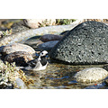 wildlife garden home bird wagtail water