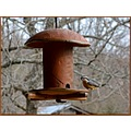redbreastednuthatch bird birdfeeder nature