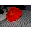 red rose book