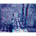 anaglyph 3D stereo woods nature path