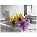 Still life fine art flowers photoshop spideyj