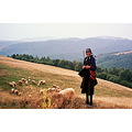memmories mountain golija portrait landscape sheep nature serbia