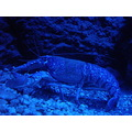 aquarium dubrovnik kroatia lobster blue