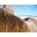 butch horse frost winter cold